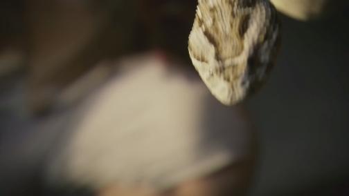 [自然传奇]十大毒蛇4预告(2月10日)