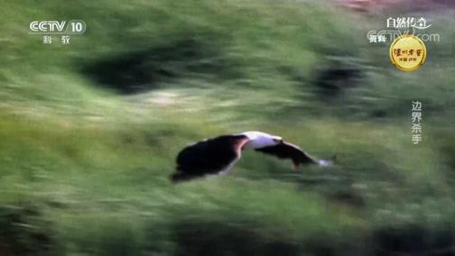 《自然传奇》 20190214 边界杀手