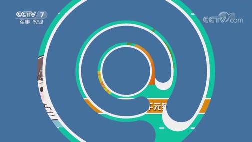 《聚焦三农》 20190227 2019用工调查:流动的人 固定的心