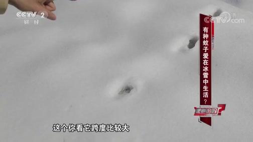 有种蚊子爱在冰雪中生活 是真的吗 2019.03.02 - 中央电视台 00:10:16