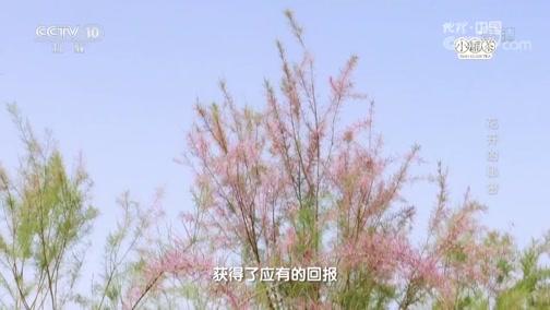 《地理中国》 奇趣自然·花开的秘密 00:23:35
