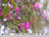 午间新闻广场 2019.03.19 - 厦门电视台 00:21:07