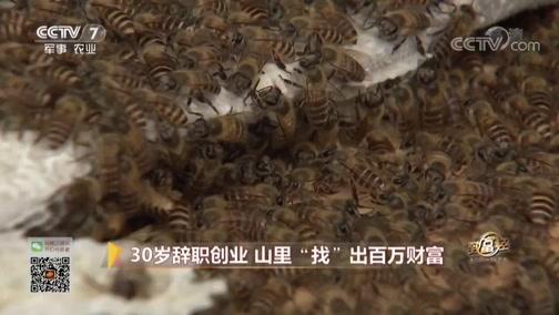 """《致富经》 20190321 30岁辞职创业 山里""""找""""出百万财富"""