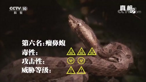 《真相》 十大致命毒蛇(上) 00:43:36