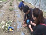 做好蔬菜生意的职业新农人 视点 2019.03.30 - 厦门电视台 00:14:52