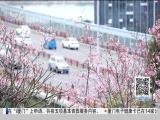 特区新闻广场 2019.04.08 - 厦门电视台 00:24:02