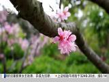 午间新闻广场 2019.04.09 - 厦门电视台 00:20:40