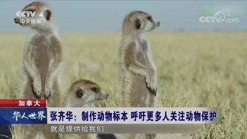 加拿大 张齐华:制作动物标本 呼吁更多人关注动物保护 华人世界 2019.04.19 - 中央电视台 00:01:48