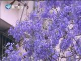 新闻斗阵讲 2019.05.08 - 厦门卫视 00:25:16