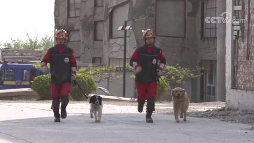 摄影师与搜救犬的赛跑大赛
