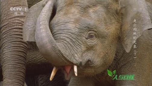 [人与自然]多个大象受伤 伤口触目惊心