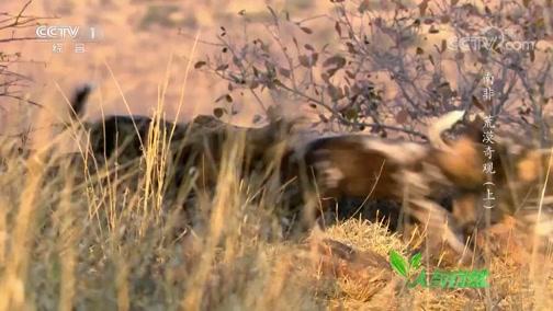 《人与自然》 20190520 南非——荒漠奇观(上)