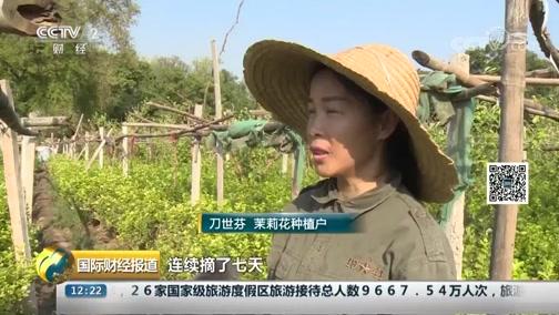 [国际财经报道]云南元江:持续高温 带火了茉莉花价
