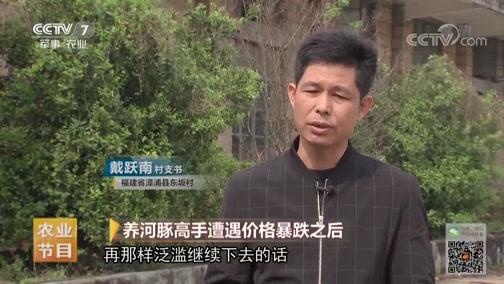 [致富经]佛昙镇的河豚行情在2013年发生翻天覆地的变化