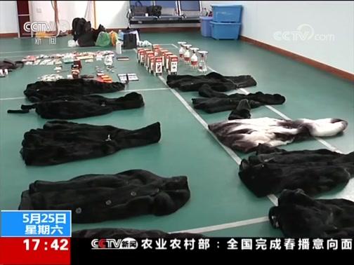 """[新闻直播间]黑龙江 """"貂皮大盗""""落网 有家不回 三处住所迷惑警方视线"""