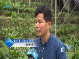 逐梦田园的夫妻 视点 2019.06.08 - 厦门电视台 00:15:15