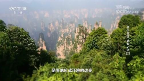 [探索发现]中国古代姓氏的传承