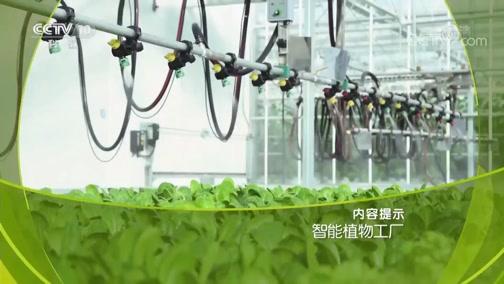《走近科学》 20190704 智能植物工厂
