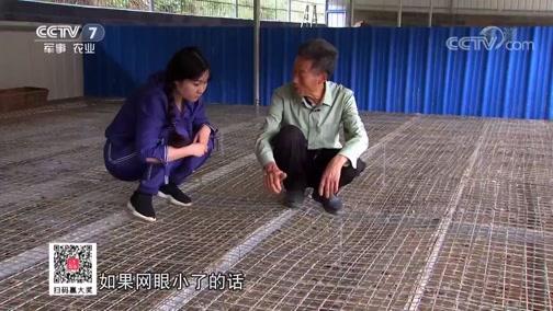 """《科技苑》 20190708 """"绿""""招养铜鹅"""