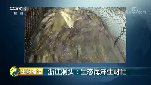 《生财有道》 20190715 夏日经济系列 浙江洞头:生态海洋生财忙