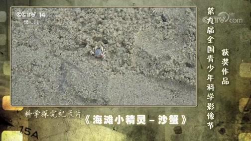 [芝麻开门]第九届全国青少年科学影像节获奖作品:《海滩小精灵—沙蟹》