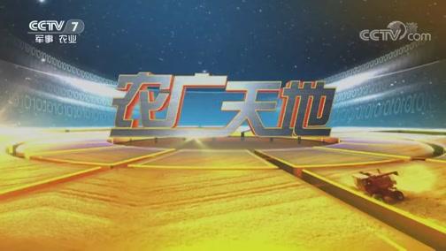 《农广天地》 20190719 倔强男人种下丑橘之后