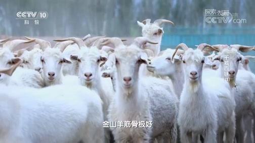 [探索发现]贺兰山下的大铁锅炖金山羊