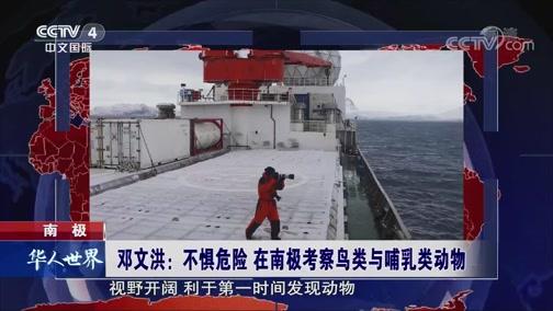 [华人世界]南极 邓文洪:不惧危险 在南极考察鸟类与哺乳类动物