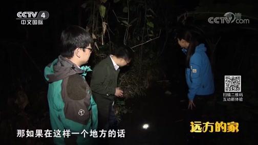 [远方的家]系列节目《大好河山》——秘境之踪 寻找野外鳄蜥