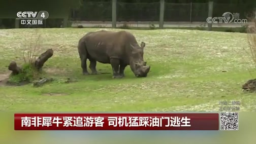 [中国新闻]南非犀牛紧追游客 司机猛踩油门逃生