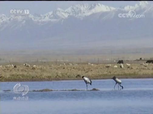 《焦点访谈》 20190828 国家公园 公园国家