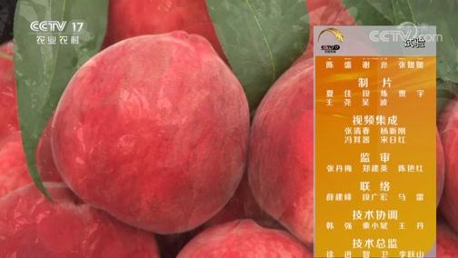 《田间示范秀》 20190908 桃园里的省心事