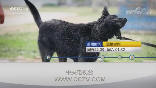 """《见证》 20190913 超能警犬(一)""""犬""""力出击"""