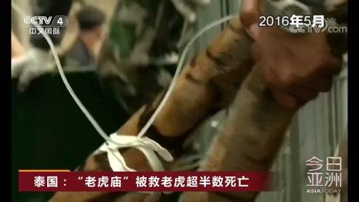 """[今日亚洲]泰国:""""老虎庙""""被救老虎超半数死亡"""