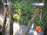 多情人间(2) 斗阵来看戏 2019.09.21 - 厦门卫视 00:49:51