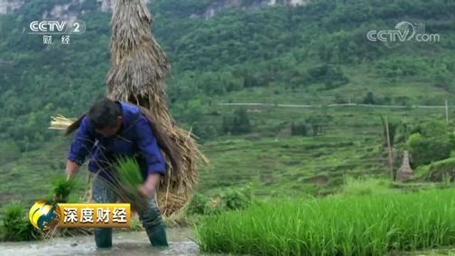 [深度财经]小满前后 开秧祭祀 土家族人的传统祈求风调雨顺