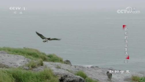"""[动物世界]对鲣鸟而言 没有天敌的时候 暴风雨就是""""天敌"""""""