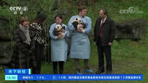 """[天下财经]比利时:大熊猫""""宝弟""""""""宝妹""""亮相"""