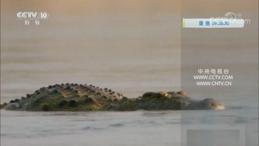 《自然传奇》 20191125 鳄鱼争霸