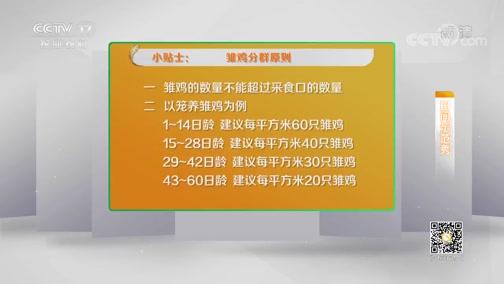 《田间示范秀》 20191207 精养雏鸡抓细节