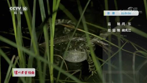 《自然传奇》 20200107 蛙族传奇
