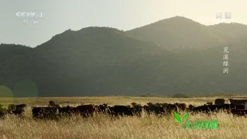 《人与自然》 20200125 荒漠绿洲