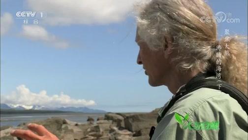 《人与自然》 20200130 聚焦大熊——沸腾的海湾(下)