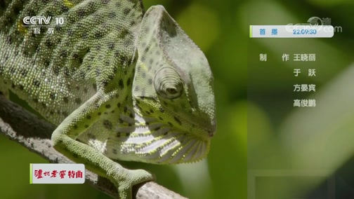 《自然传奇》 20200318 狡猾的爬行动物