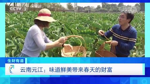 《生财有道》 20200330 云南元江:味道鲜美带来春天的财富