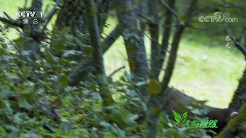 《人与自然》 20200331 春光映照下的森林