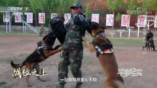 《军事纪实》 20200430 战位之上 我是军犬驯导员