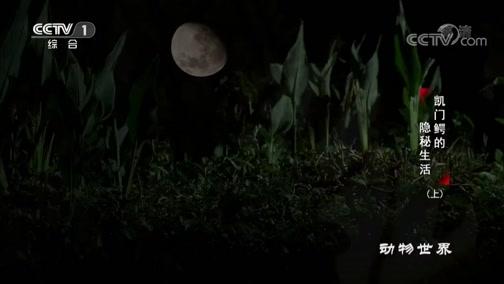 《动物世界》 20200501 凯门鳄的隐秘生活(上)