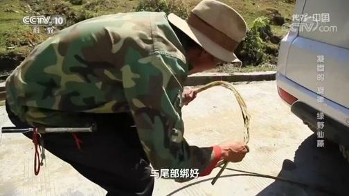"""《地理·中国》 20200513 凝固的""""旋律""""·绿野仙藤"""