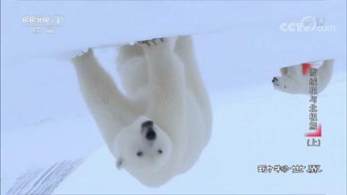 《动物世界》 20200516 雪绒花与北极熊(上)
